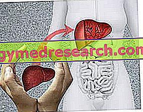 Presaditev jeter