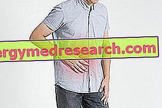 Akut cholecystit: Vad är det?  Orsaker, symtom, diagnos, terapi och prognos av A.Griguolo