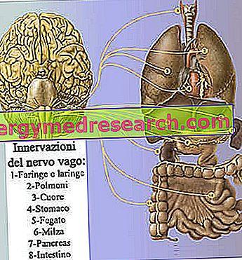 hipertenzijos šilkmedžio gydymas