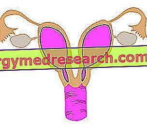 Uterus Didelphus - Double uterus