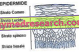 A epiderme