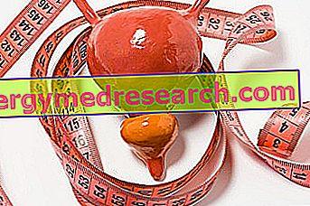 Prostata adenom av G.Bertelli