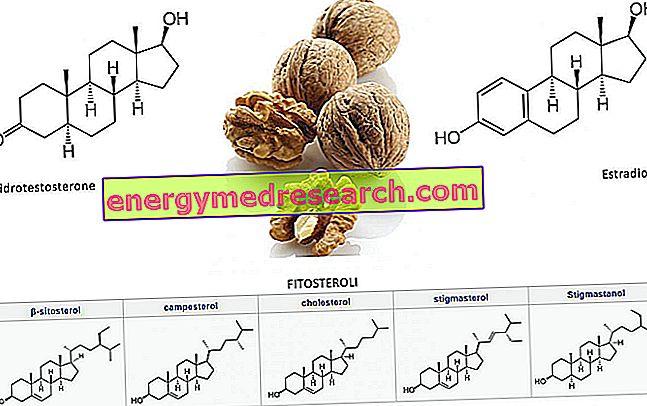 Nødder, prostata, phytosteroler og kolesterol