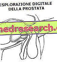 الاستكشاف المستقيم الرقمي للبروستاتا