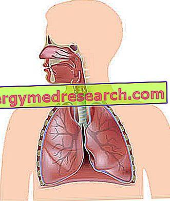 Plaučių širdis - Hipertenzija November