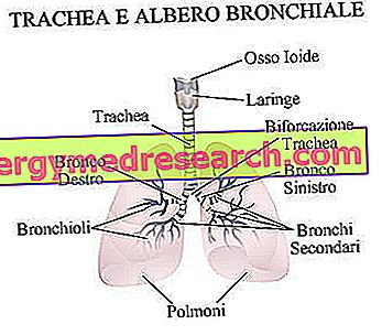 bronchus plečiantys vaistai nuo hipertenzijos