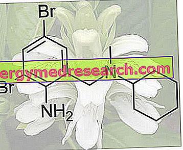 Бромекина, Бромекина Хидроцхлориде