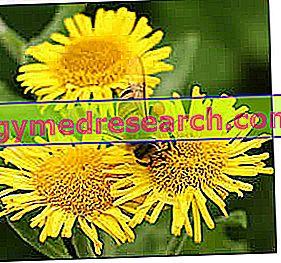 Pyl alergie a kvetoucí kalendář