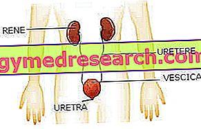 Veri uriinis - hematuuria