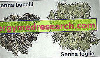 Senna - dabiskā caureja