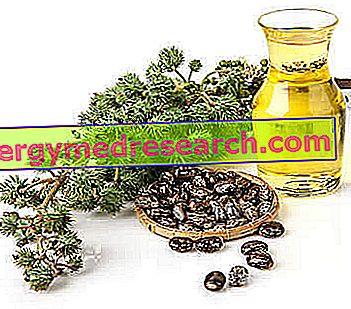 Aceite de ricino: usos y propiedades