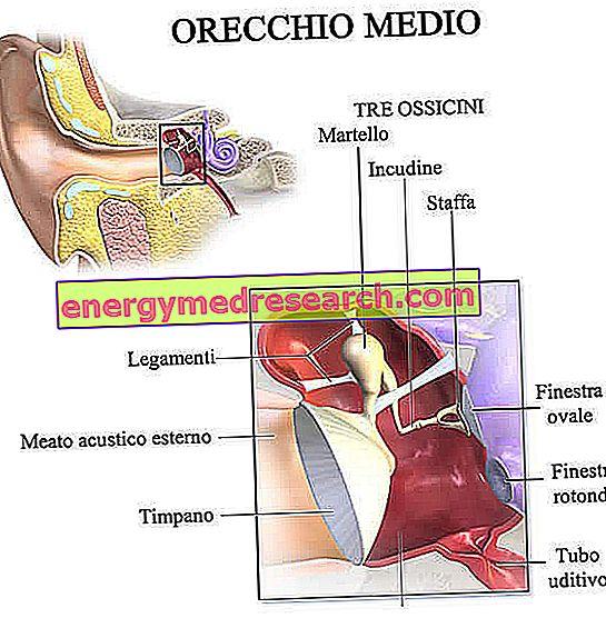 Uho - Kako je narejeno in kako deluje