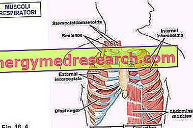 Dihalni sistem in dihalna gimnastika