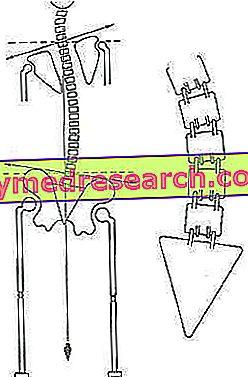 Dismetrie van de onderste ledematen, valse korte benen of echte korte benen?
