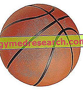 Evaluación morfo funcional del jugador de baloncesto.