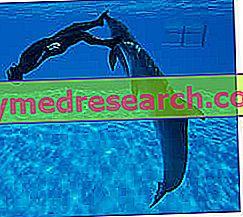 Mergulho Subaquático - Riscos e Perigos