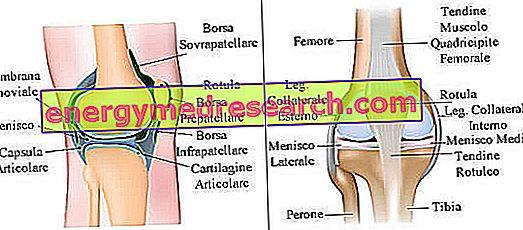 articulația artificială a genunchiului este)
