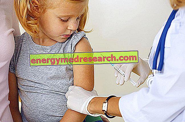 Meningitis neumocócica: vacunas disponibles