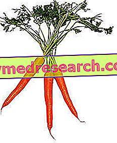 fogyás lila sárgarépa malibu ideális fogyás