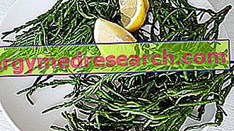 Mořský chřest: Nutriční vlastnosti, použití ve stravě a jak jíst R.Borgacci