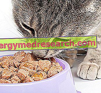 Nourrir le chat