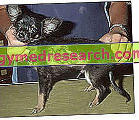 Hautkrankheiten bei Tieren