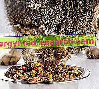 Cat's Diet - Van crunchies tot vlees