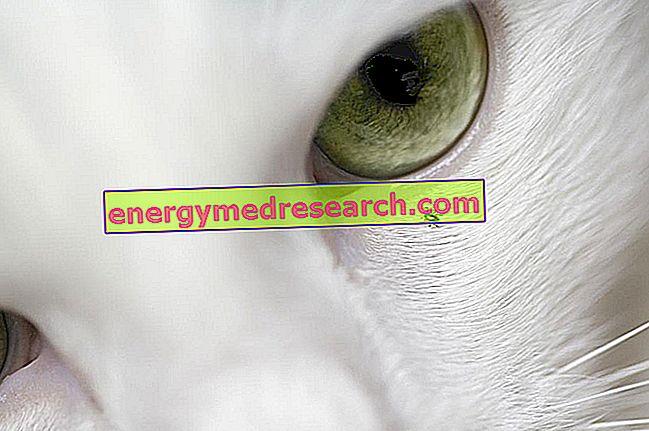 Hundar, katter och fästkontroll