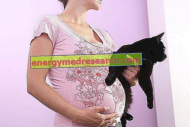Vloga mačke pri prenosu toksoplazmoze na ljudi