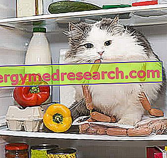 Száraz élelmiszer a macska számára