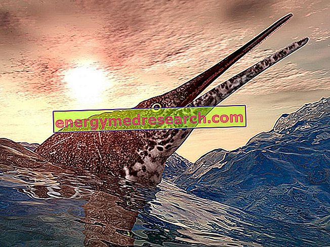 Seniausias vėmimas priklauso ipiosaurui