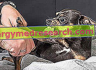 Dog Bite - Que faire?
