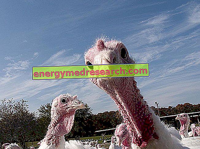 鳥インフルエンザは動物にどのように現れますか?