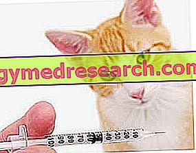 Katten vaccinatie