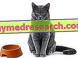 Diabetes no gato